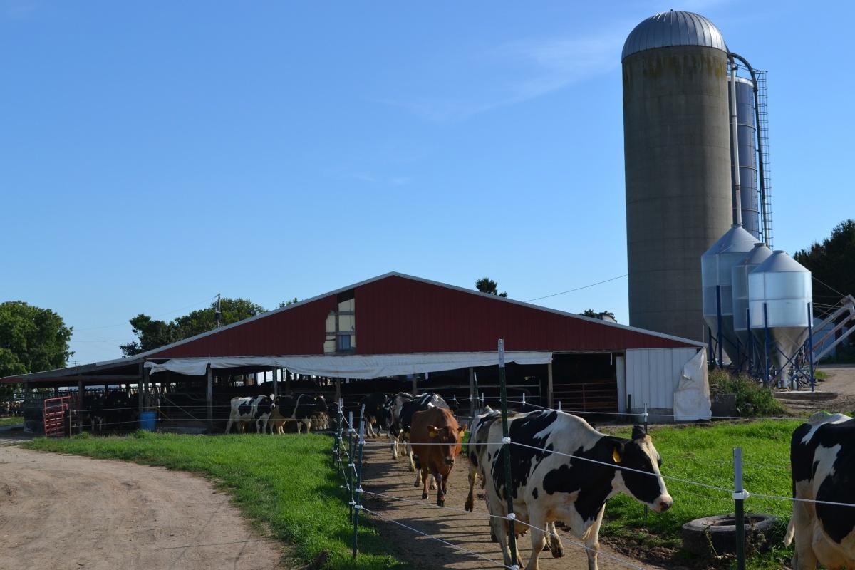 Wisconsin Dairy Farms For Sale Ron Brath Dairy Farm